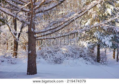 dark winter forest image photo free trial bigstock