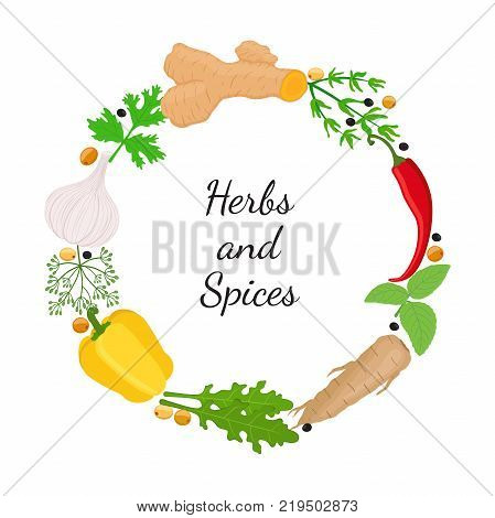 Hebs, spices - arugula, garlic, bell pepper, basil, thyme, chili pepper, turmeric root, dill, horse radish. Made in cartoon flat style. Vector illustration