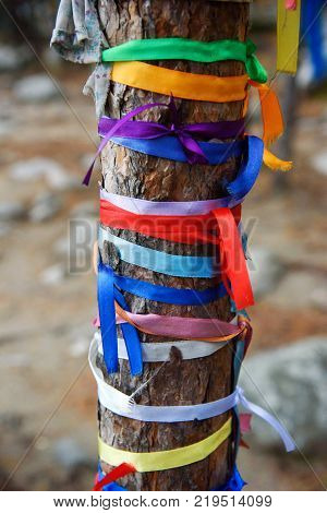 Colored Ribbons To The Holy Tree. Zalaal. Near Source Of Mineral Water. Arshan. Russia