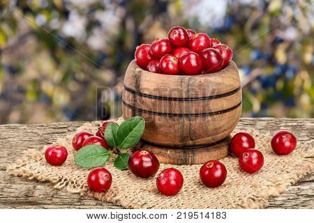 Cranberry with leaf in wooden bowl on old wooden table with blurry garden background.