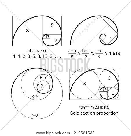 Golden fibonacci ratio spirals. Gold section proportion vector visualization. Spiral proportion golden section illustration