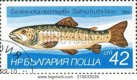 Ukraine - circa 2017: A postage stamp printed in Bulgaria shows drawing fish Brown Trout Salmo trutta morpha fario. Series: Fish. Circa 1983.