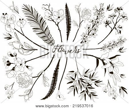 Collection of Floral Design Elements. Hand Drawn Branches and Flowers. Decorative Vector Illustration. Lily Flower, Cherry Blossom, Calla, Orchid, Peony, Fern Leaf, Bamboo Leaves,