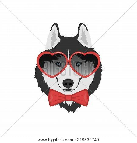 Dog in love with red bow tie and heart shaped glasses. Black and white Siberian husky with blue eyes. Valentine's day greeting card. Vector illustration