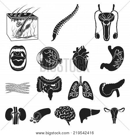 Internal organs of a human black icons in set collection for design. Anatomy and medicine vector symbol stock  illustration.