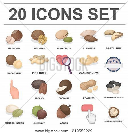 Different kinds of nuts cartoon icons in set collection for design.Nut Food vector symbol stock  illustration.