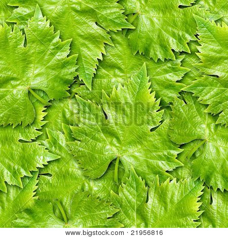 Vine leafs seamless background - texture pattern for continuous replicate.