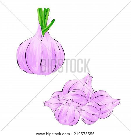 Garlic in cartoon style. Isolated object. Garlic set. Vegetable from the garden. Organic food.