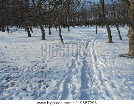 Snowy road in a winter park with bare trees