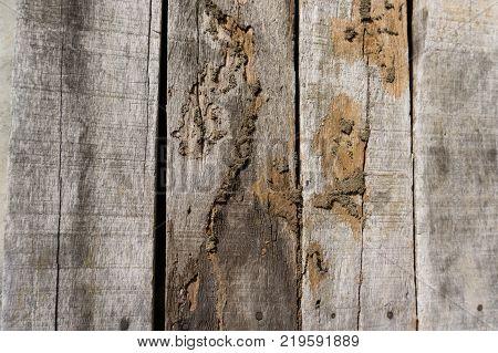 Old wood floor with wood termites.termites wood