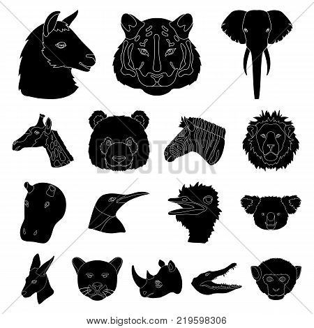 Wild animal black icons in set collection for design. Mammal and bird vector symbol stock  illustration.