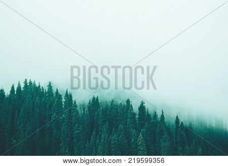 Misty fog in pine forest on mountain slopes. Color toning, faded