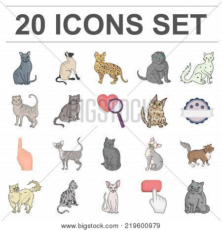 Breeds of cats cartoon icons in set collection for design. Pet cat vector symbol stock  illustration.