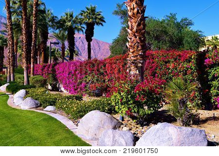 Manicured landscaping including palm trees, plants, flowers, and green lawn taken in Palm Springs, CA