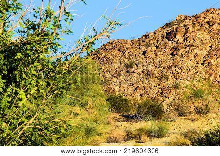 Chaparral shrubs surrounded by an arid desert terrain taken in the Mojave Desert, CA