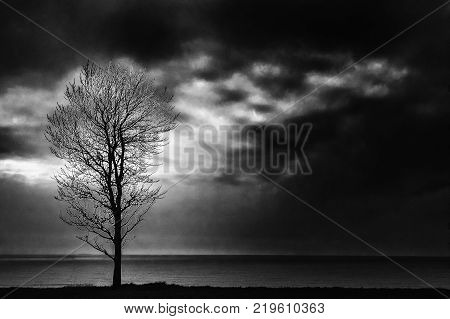 A lone tree stands on the beach with large clouds