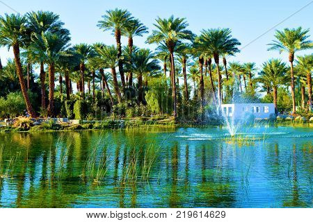 Pond with a fountain surrounded by lush green plants and Date Palm Trees taken in a Zen Garden