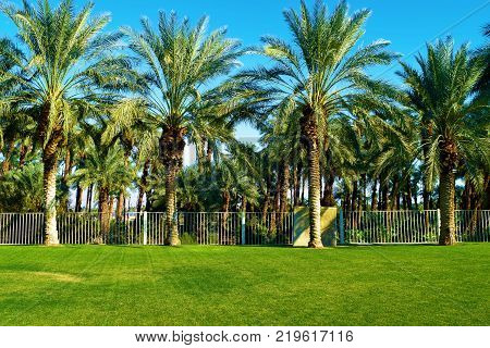 Manicured lawn surrounded by palm trees taken in a desert residential neighborhood park