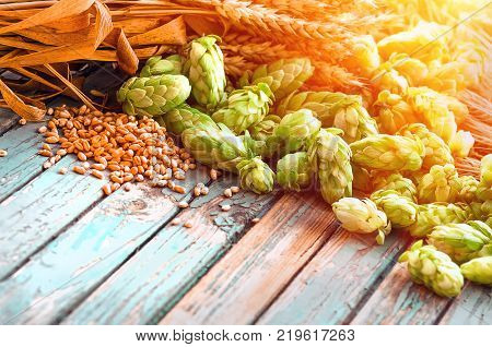 Green hops, malt, ears of barley and wheat grain, ingredients to make beer and bread, agricultural background