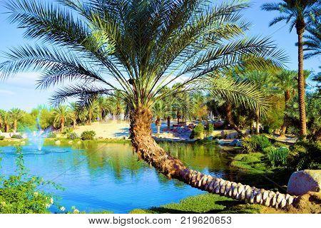 Desert Oasis with Date Palm Trees beside a pond taken in a Zen Garden