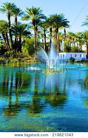 Pond surrounded by Date Palm Trees taken in a lush green Zen Meditation Garden