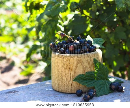 Fresh Berries Of Black Currant In Wooden Bowl On Garden Background. Ribes Aureum Known By The Common