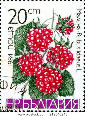 Ukraine - circa 2017: A postage stamp printed in Bulgaria shows drawing Raspberry Rubus idaeus. Series: Fruits. Circa 1984.