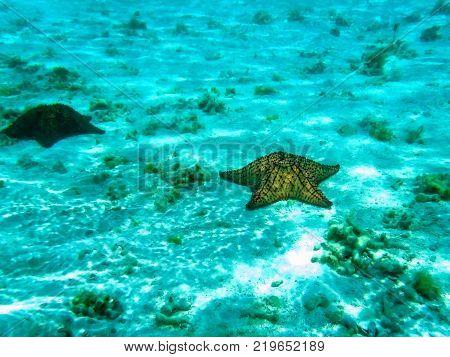 Starfish in a crystalline sea (Los Roques archipelago, Venezuela).