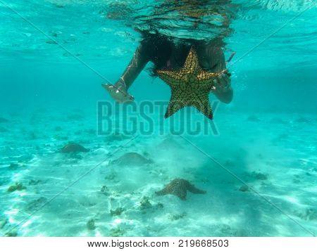 Snorkeling photography starfishes in a crystalline sea Los Roques archipelago, Venezuela
