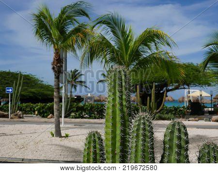Tropical vegetation with cactus in Aruba beach (Dutch Antilles).