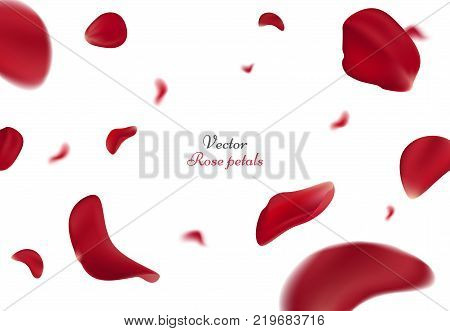 Falling red rose petals isolated on white background. Vector illustration with beauty roses petals, applicable for design of greeting cards on March 8 and St. Valentine's Day. Eps 10