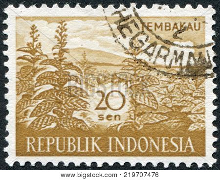INDONESIA - CIRCA 1960: A stamp printed in the Indonesia is devoted to Agricultural Products. Tobacco plant circa 1960