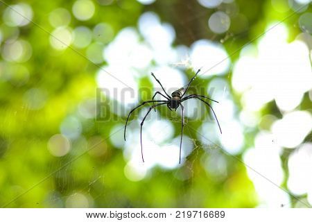 spider in its web with blurry background