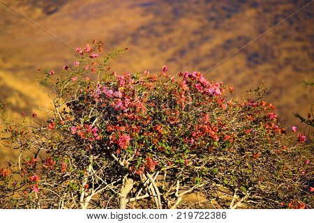 Plants and flowers overlooking an arid dry plain with rural golden grasslands taken in Central California