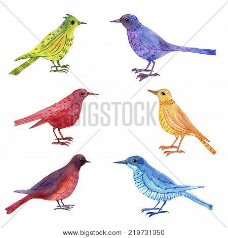 watercolor drawing bird, hand drawn songbirds, isolated painting elements