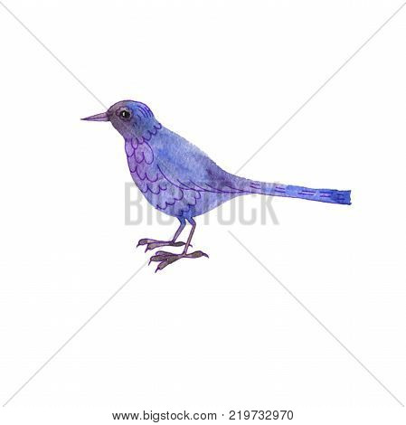 watercolor drawing blue bird, hand drawn songbird at white background, isolated painting element
