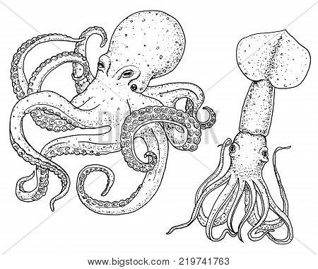 sea creature octopus and squid. calamari engraved hand drawn in old sketch, vintage style. nautical or marine, monster or food. animals in the ocean. template for logos, labels and emblems