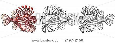 Friendly colorful red strips lionfish and black contour line separately on a white background. Beautiful fish, pterois volitans. Manual vector illustration, coloring