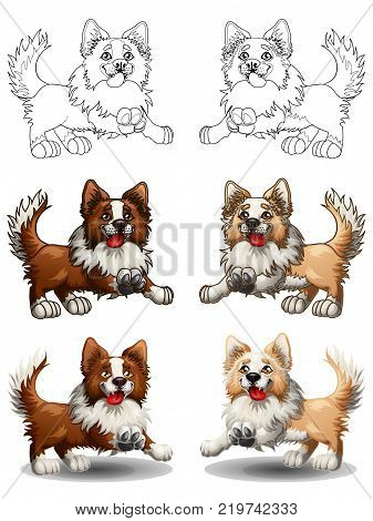 The set of cheerful dogs of a Border Collie, brown and light-red with white, runs forward. The variants of colorfull and contour line. A cartoon vector illustration isolated on white.