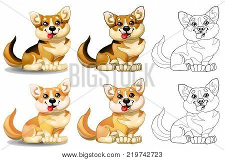 The set of lovely dogs of a Welsh Corgi sits, brown and light-red of colorfull and contour line. A cartoon vector illustration isolated on white.