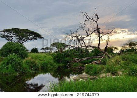 Beautiful landscape with river in savannah of the Serengeti national park shown at sunset Tanzania Africa