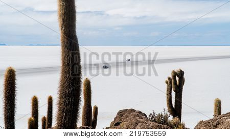 Incahuasi island in the Uyuni Saline Salar de Uyuni Aitiplano Bolivia