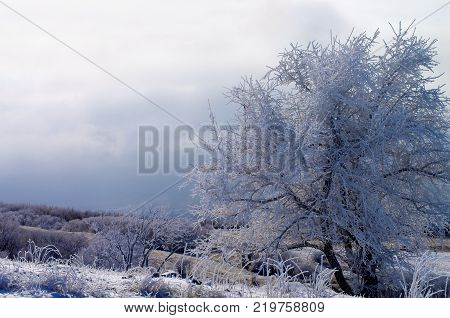 Beauty Winter Landscape with Snowy Frozen Tree on Dramatic Grey Cloudy Sky background Outdoors