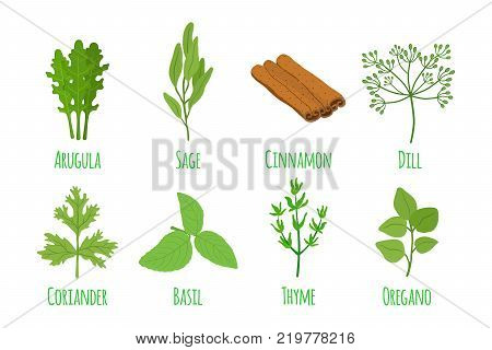 Herbs and spices, basil, thyme, arugula, sage, oregano, coriander, cinnamon. Organic green condiment. Made in cartoon flat style. Vector illustration