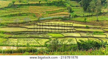 Vegetable garden green rice fields terraces complex paddy cultivation systems the concept of Agro tourism agricultural Sri Lanka