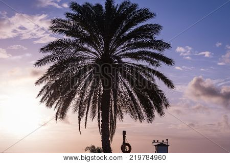Palm with a sunset background in a caribbean beach coche island, Margarita, Venezuela