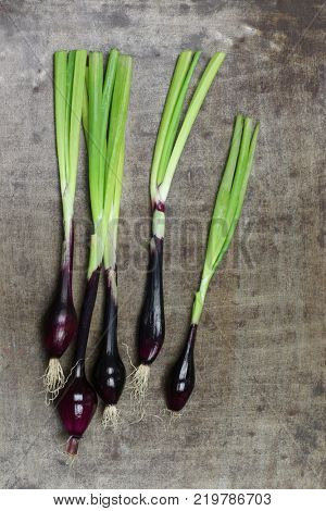 Fresh cut red spring onions on a grungy metal background