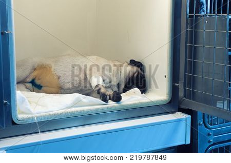 The patient is a dog in a cage , a place for convalescent animals, in the veterinary clinic