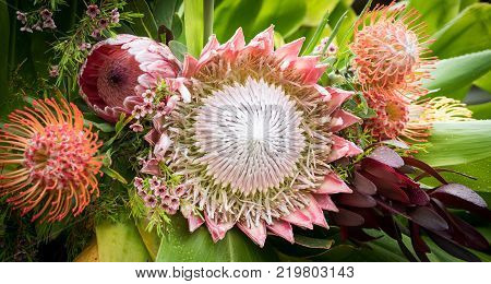 Colorful, Tropical Protea Blossom Bouquet with Pin Cushion Flowers