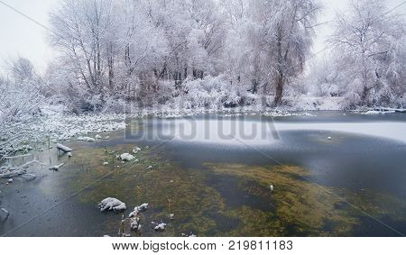 the forest on the shore of the freezing lake in the winter